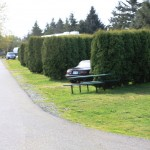 The Cedars RV Resort | Ferndale, WA | Campsites