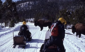 Snowmobiles in Yellowstone National Park